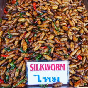Eating Insects in Koh Lanta, Thailand