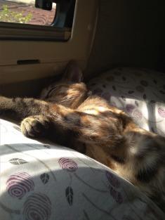 Kitten sleeping on a pillow.